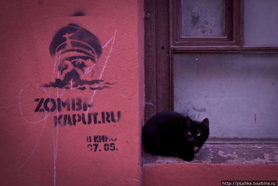 Банковский переулок. Кот. Идем от набережной канала Грибоедова