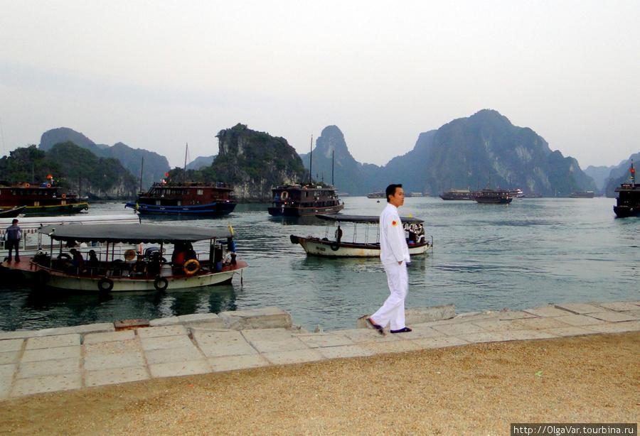 Новые туристы прибыли на остров