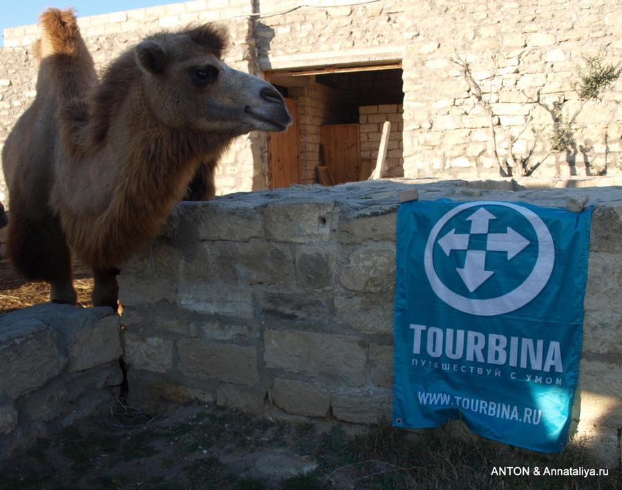 Верблюд музейного комплекса
