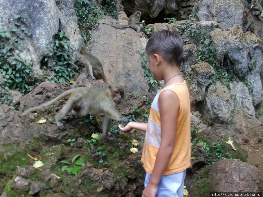 Для ребенка огромное удовольствие покормить обезьянок. Особенно они любят чипсы.