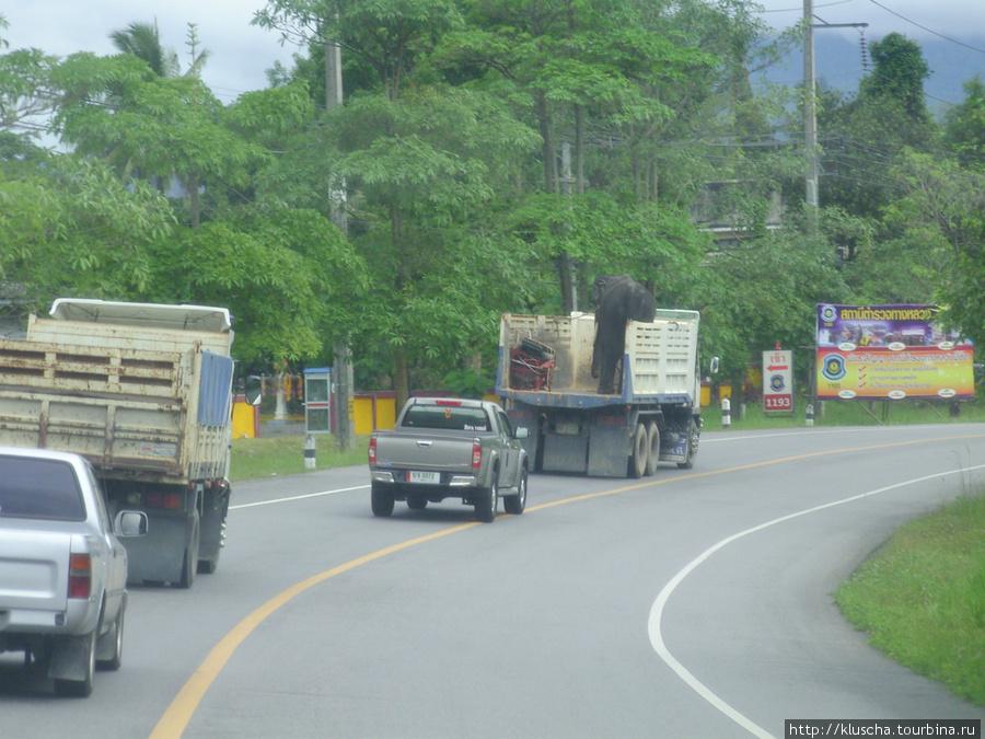 Транспортировка слона.