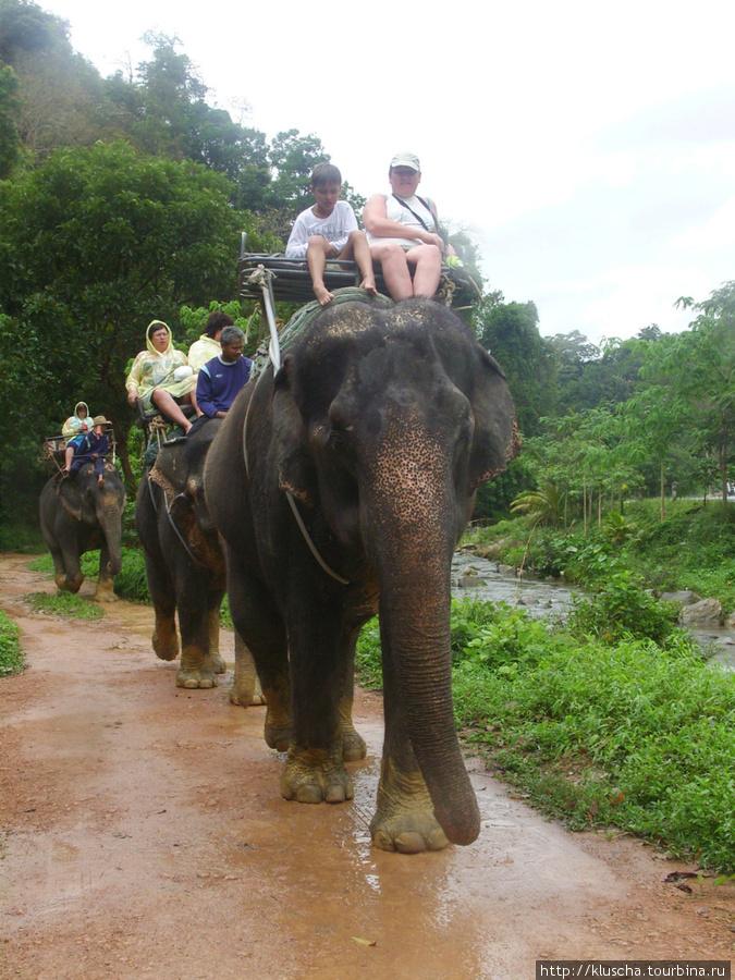 Сафари. А слоны такие теплые и добрые.