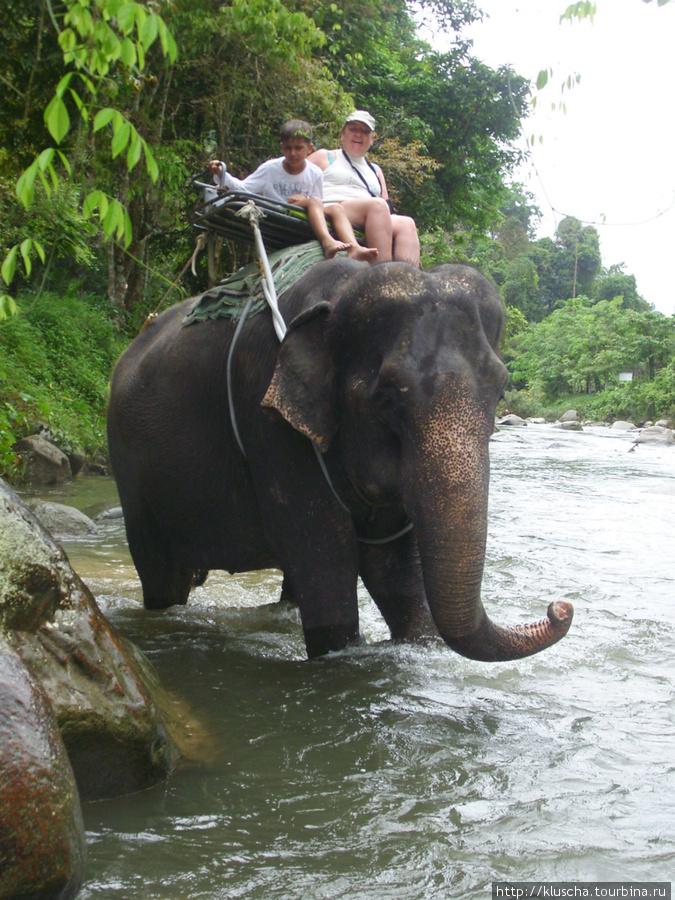 Пожалела, что не прокатилась на шее у слона.