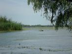 вдали белые пятнышки — это пеликаны, озеро очень мелкое и много водорослей, поэтому на нашем катере туда не доплыть