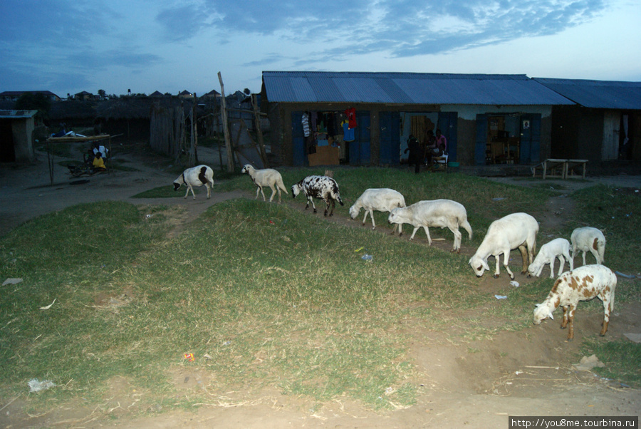 тут еще и овцы :) коровы тоже есть