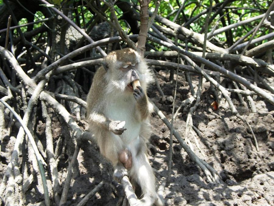 Обитатель джунглей