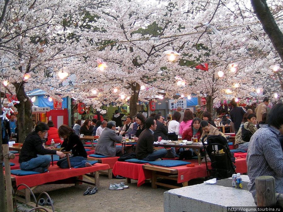 Сидение под сакурой при ресторане, ханами.