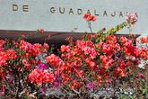 А это вход в университет. И куст Бугамбилии. Она цветёт фиолетовыми, розовыми и белыми цветами. Вероятно, самое распространённое растение в Мексике.