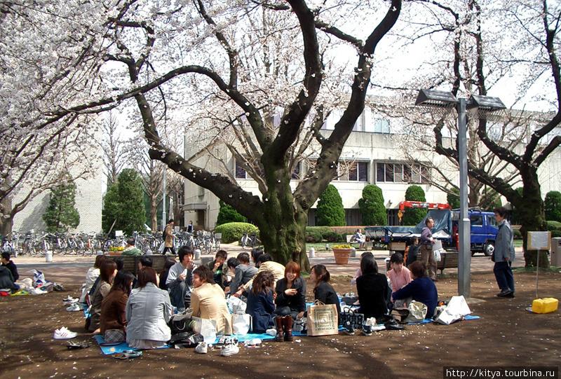В кампусе Токийского техн