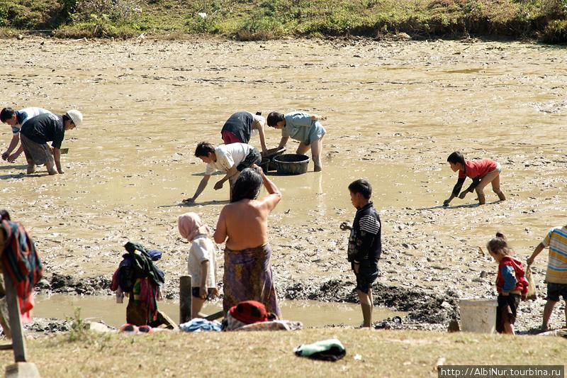 Лаосцы обожают глинистые лужи. Они там собирают каких-то моллюсков, отмываются в колодце поблизости, там же играют дети, спасаясь в прохладной жиже от полуденного солнца.