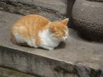 Кошка:
