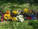 Небольшая посадка декоративных цветов