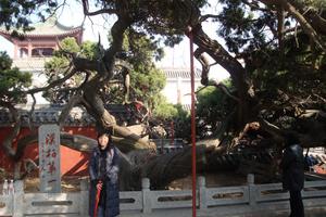 Говорят, что этот кипарис посадил император Хань У-Ди в династии Хань (более 2000 лет назад).