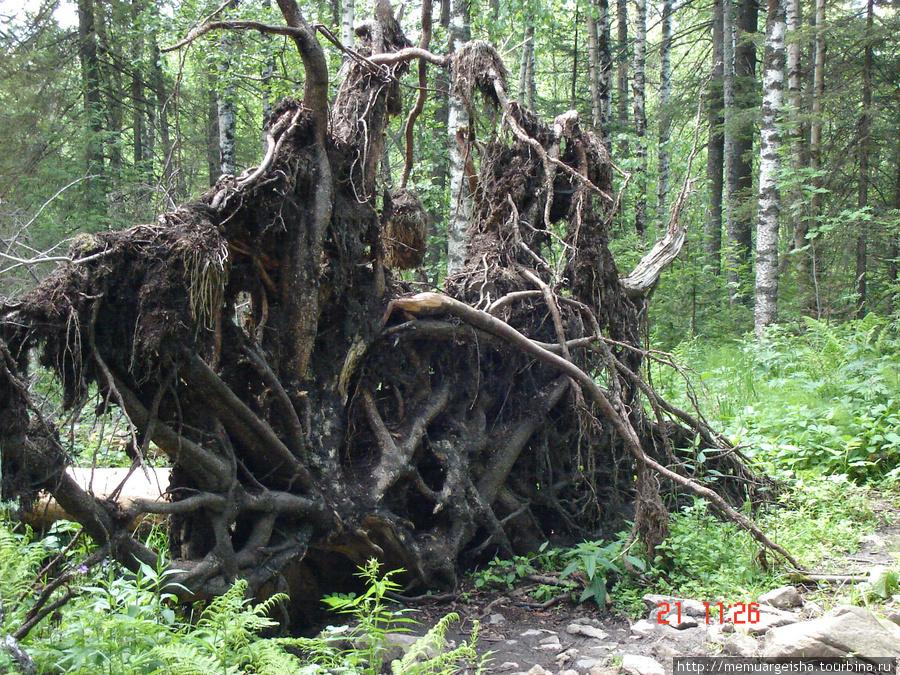 Поваленное дерево