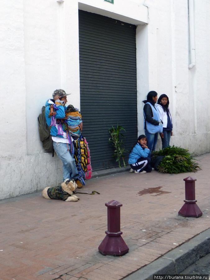 Продавец одежды для собак