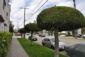 Самые странные деревья, что я видел