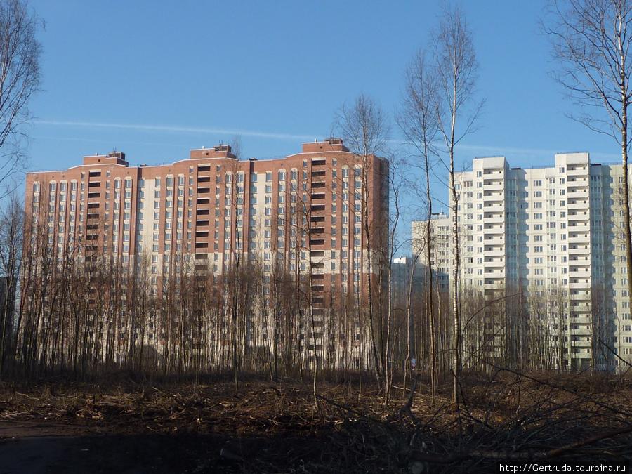 Жилые дома-новостройки на ул. Бадаева.