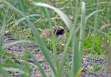 Быстро в траве обнаружили птенца... Вау, стоп машина, будем снимать...