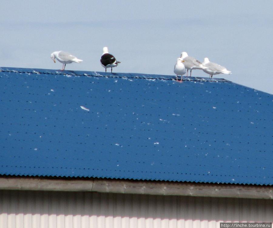У кафе синяя крыша, видно далеко...