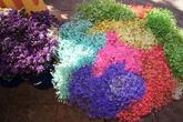 Цветы в Чикимуле