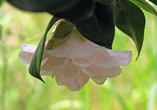 Если я не ошибаюсь, название этого цветка записывается тем же канжем, что и слово женщина