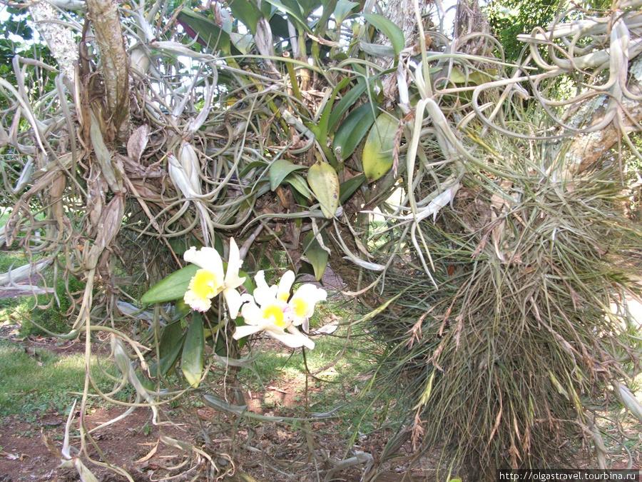 Этот цветок я знаю как называется — Орхидея!