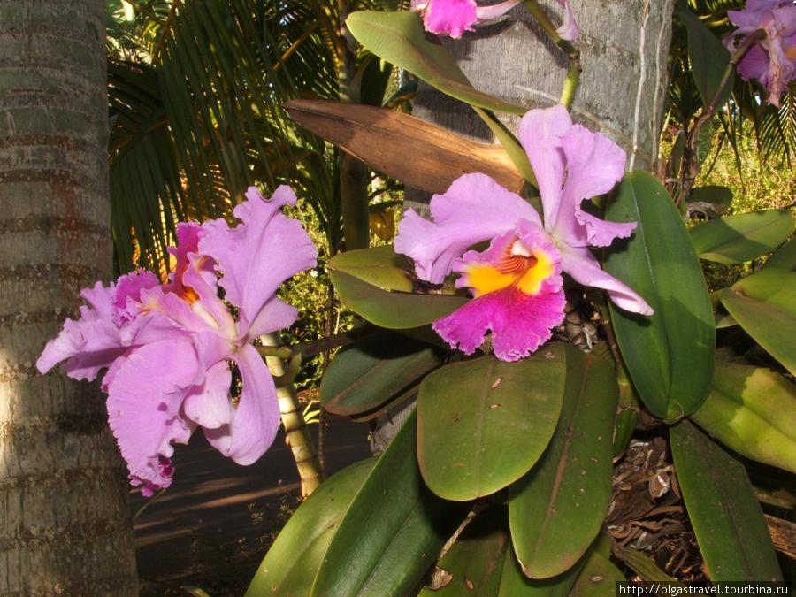 Еще одна Орхидея!