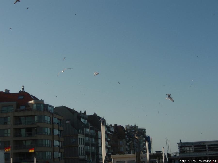Полчища птиц кружат над городом