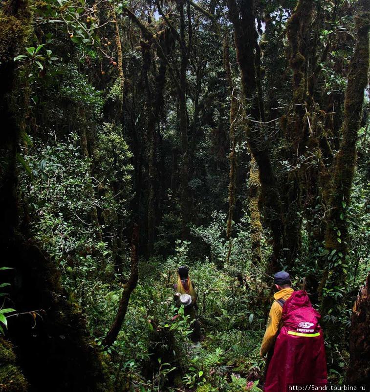 Путь в деревню Дама