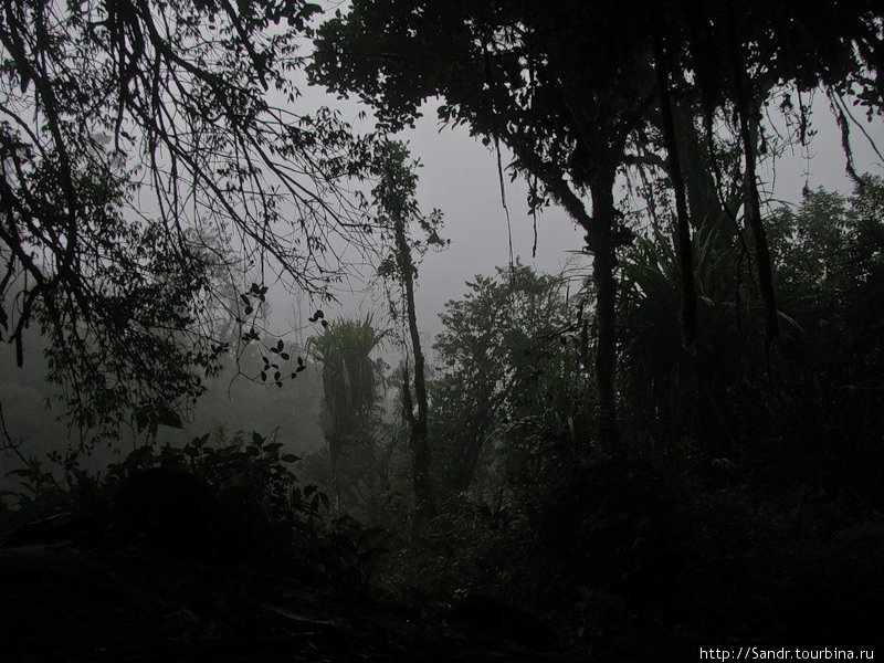 Джунгли в плохую погоду…