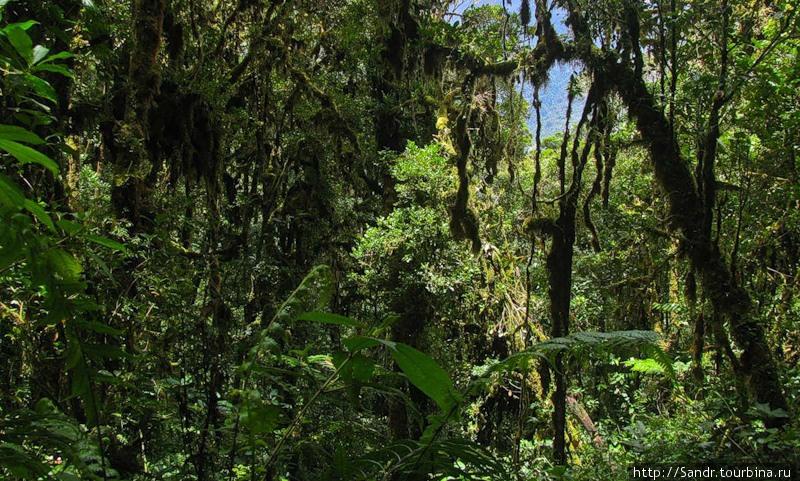 …и джунгли в хорошую пого