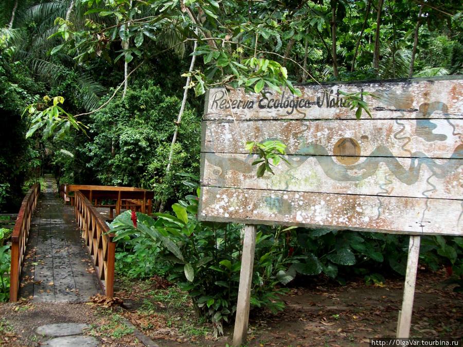 Этой дорожкой можно углубиться в джунгли