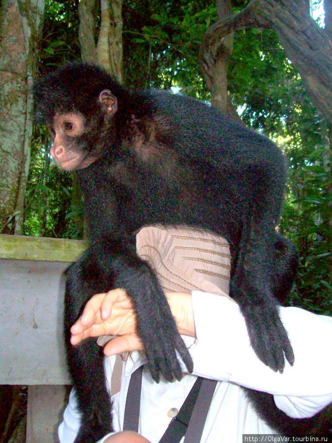 Откуда-то сверху как горох посыпались шустрые обезьянки
