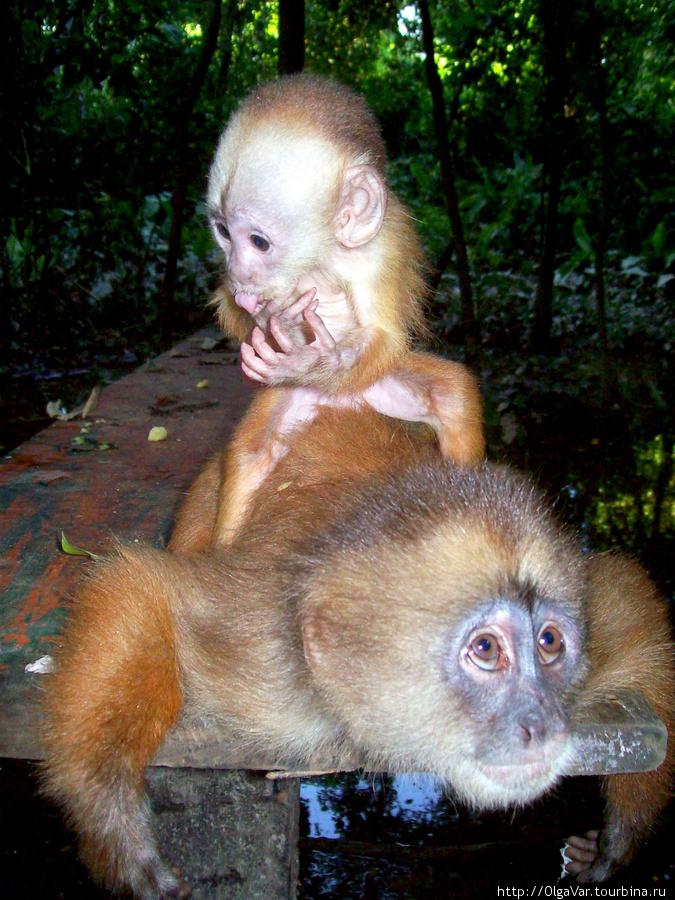 Для обезьянок обустроили место, где им оставляют пропитание