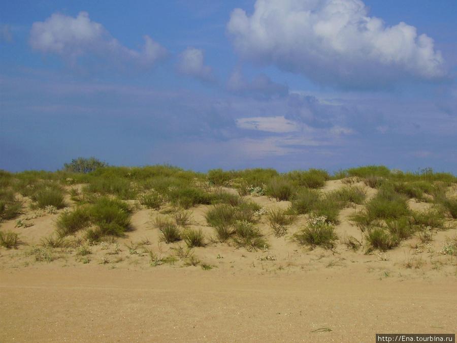 Золотые дюны