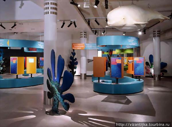 Королевский бельгийский институт естественных наук. Брюссель. Синяя галерея. Над головой симпатичный кит.