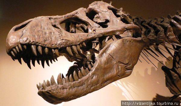 Королевский бельгийский институт естественных наук. Брюссель. Скелет доисторического ящера.