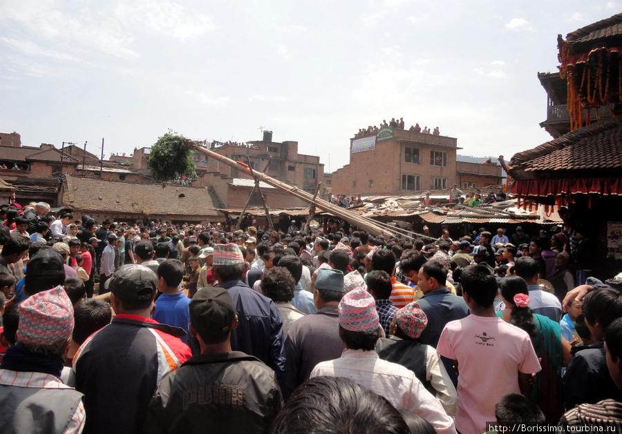 Вот так всем миром непальцы воздвигают на площади огромный шест с ярким зелёным пучком на вершине (их вариант главной ёлки страны :-). Это стоит немалых усилий и продолжается несколько часов.