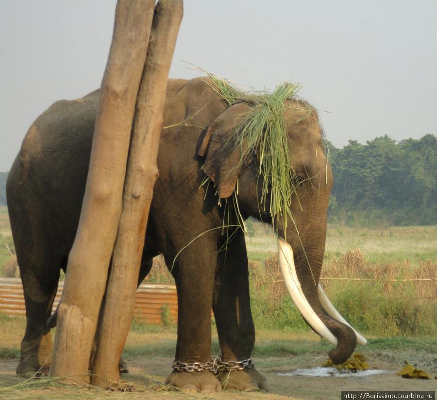 Вот так непальские слоны спасаются от зноя.