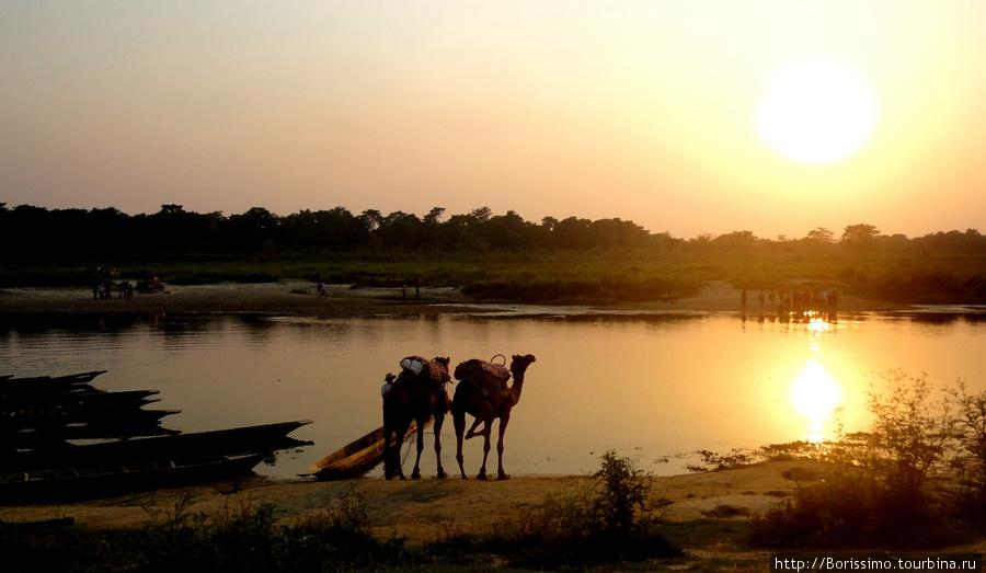 Интересно, а как попали в Непал эти верблюды?