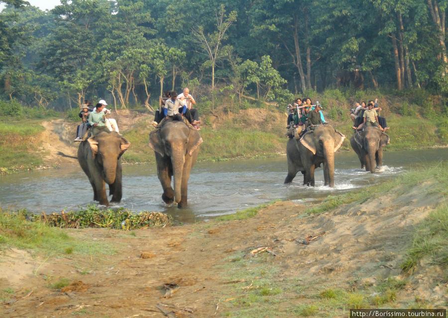 Вот такой армадой туристы движутся в джунгли (и наивно надеятся увидеть там диких животных).