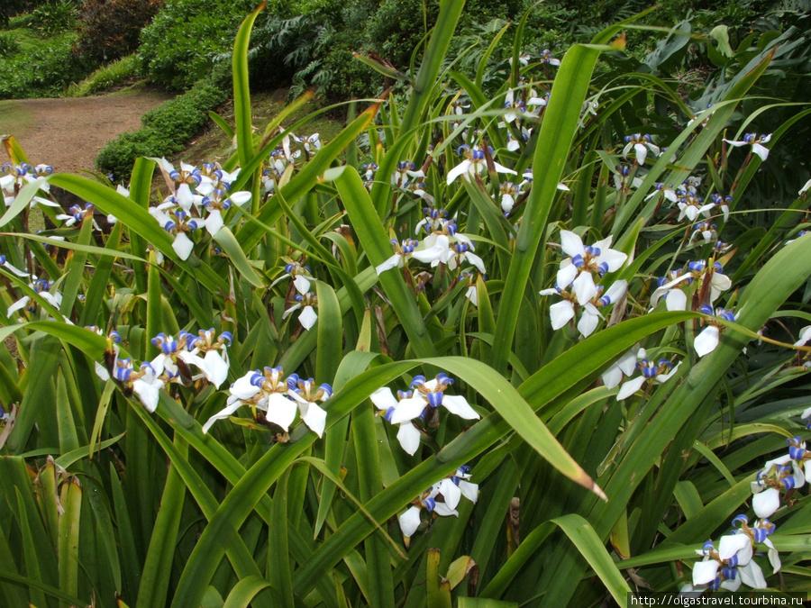 да, это сорт бамбуковых орхидей