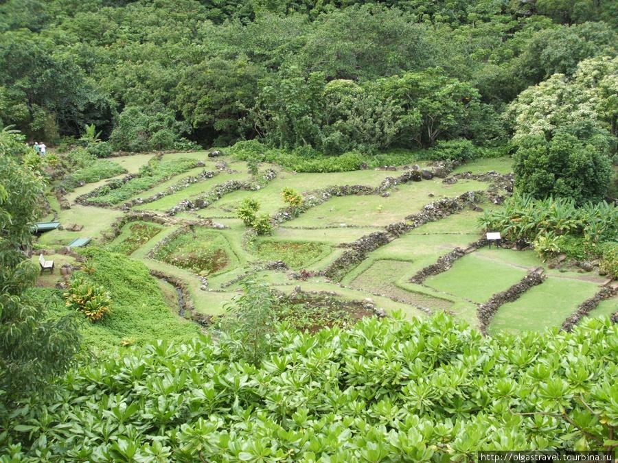Терассы — особенность северного ботанического сада Кауаи