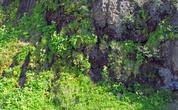Здесь начинают сочиться ручьи из скал — предвестие красавца Hraunfossar