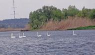 Мы с сыном ушли первыми и увидели стаю белых лебедей
