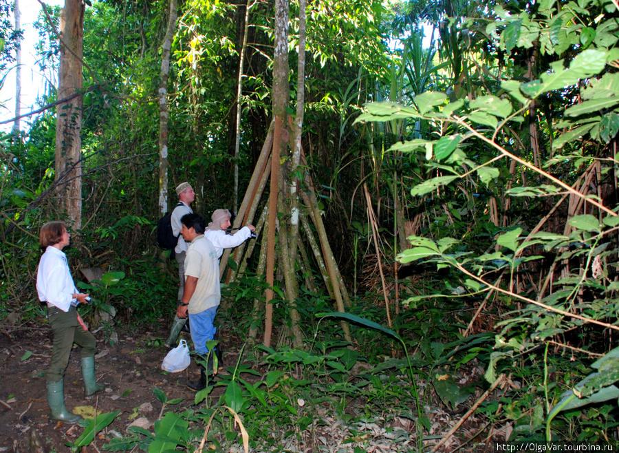 Ходячие деревья, не стоящ