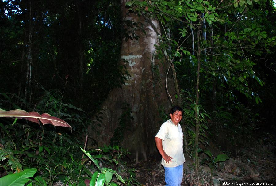 Некоторые деревья невозможно было обхватить