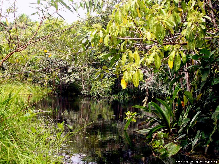 Огромную территорию леса захлестывает половодье
