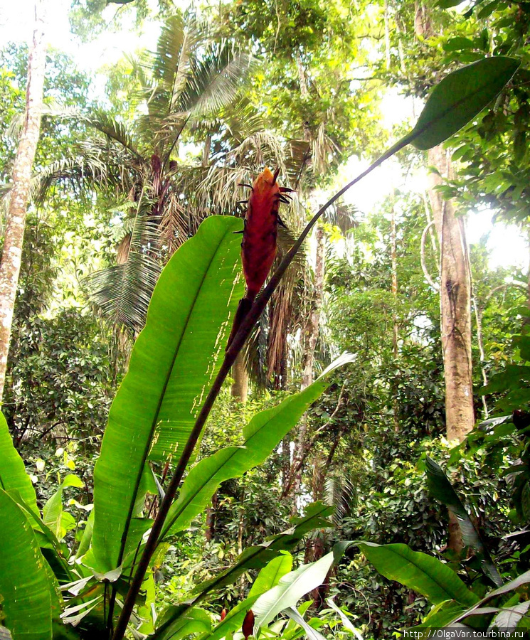 Джунгли — это царство экзотических растений