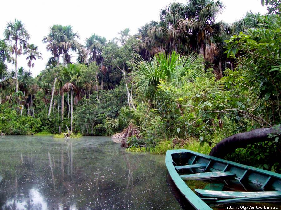 Сухих лодок в джунглях не